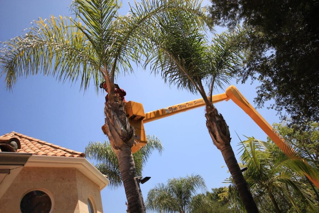 Palm Tree Trimming-Lake Wales FL Tree Trimming and Stump Grinding Services-We Offer Tree Trimming Services, Tree Removal, Tree Pruning, Tree Cutting, Residential and Commercial Tree Trimming Services, Storm Damage, Emergency Tree Removal, Land Clearing, Tree Companies, Tree Care Service, Stump Grinding, and we're the Best Tree Trimming Company Near You Guaranteed!