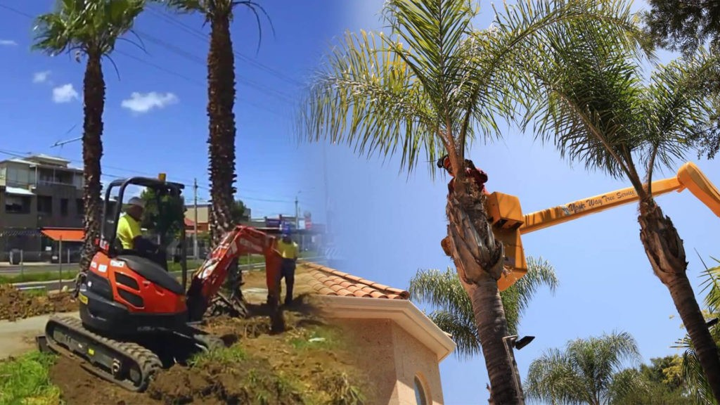Palm tree trimming & palm tree removal-Lake Wales FL Tree Trimming and Stump Grinding Services-We Offer Tree Trimming Services, Tree Removal, Tree Pruning, Tree Cutting, Residential and Commercial Tree Trimming Services, Storm Damage, Emergency Tree Removal, Land Clearing, Tree Companies, Tree Care Service, Stump Grinding, and we're the Best Tree Trimming Company Near You Guaranteed!