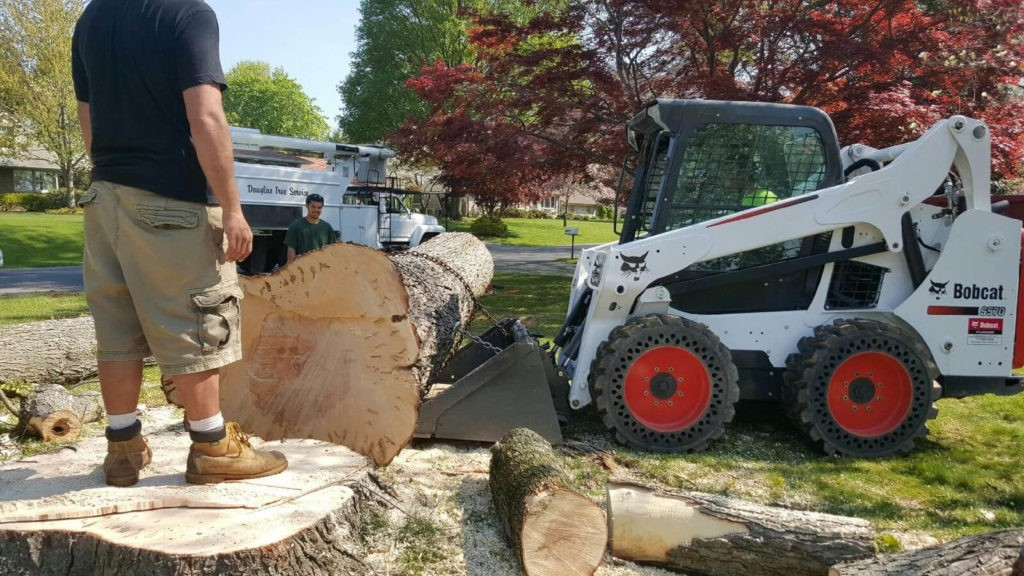 Services-Lake Wales FL Tree Trimming and Stump Grinding Services-We Offer Tree Trimming Services, Tree Removal, Tree Pruning, Tree Cutting, Residential and Commercial Tree Trimming Services, Storm Damage, Emergency Tree Removal, Land Clearing, Tree Companies, Tree Care Service, Stump Grinding, and we're the Best Tree Trimming Company Near You Guaranteed!