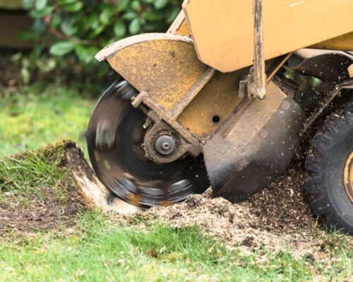 Stump Grinding-Lake Wales FL Tree Trimming and Stump Grinding Services-We Offer Tree Trimming Services, Tree Removal, Tree Pruning, Tree Cutting, Residential and Commercial Tree Trimming Services, Storm Damage, Emergency Tree Removal, Land Clearing, Tree Companies, Tree Care Service, Stump Grinding, and we're the Best Tree Trimming Company Near You Guaranteed!