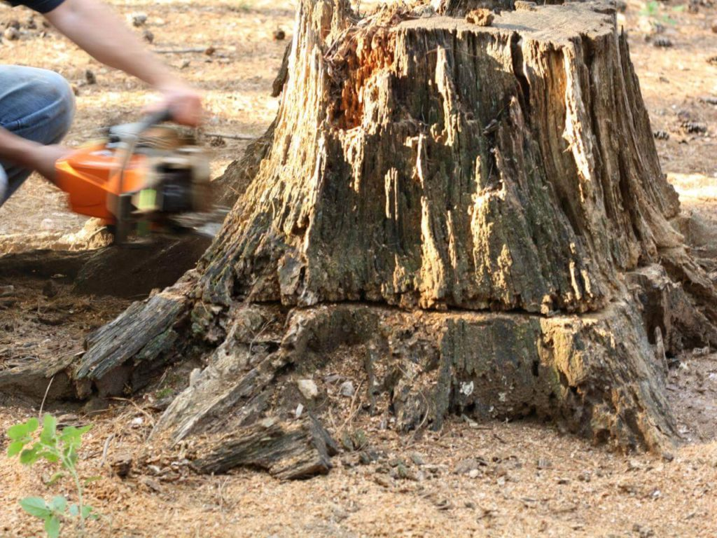 Stump Removal-Lake Wales FL Tree Trimming and Stump Grinding Services-We Offer Tree Trimming Services, Tree Removal, Tree Pruning, Tree Cutting, Residential and Commercial Tree Trimming Services, Storm Damage, Emergency Tree Removal, Land Clearing, Tree Companies, Tree Care Service, Stump Grinding, and we're the Best Tree Trimming Company Near You Guaranteed!