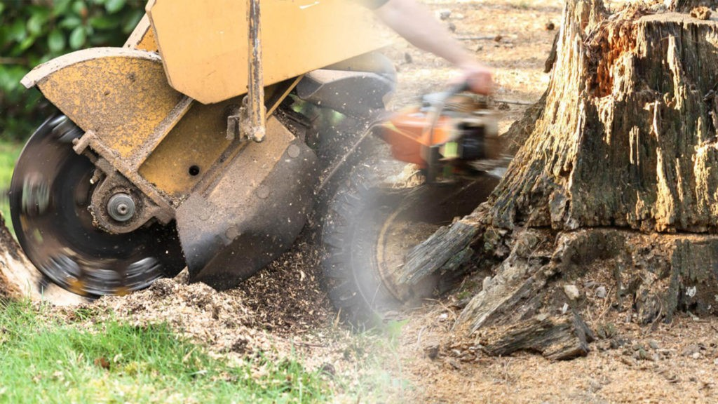 Stump grinding & removal-Lake Wales FL Tree Trimming and Stump Grinding Services-We Offer Tree Trimming Services, Tree Removal, Tree Pruning, Tree Cutting, Residential and Commercial Tree Trimming Services, Storm Damage, Emergency Tree Removal, Land Clearing, Tree Companies, Tree Care Service, Stump Grinding, and we're the Best Tree Trimming Company Near You Guaranteed!