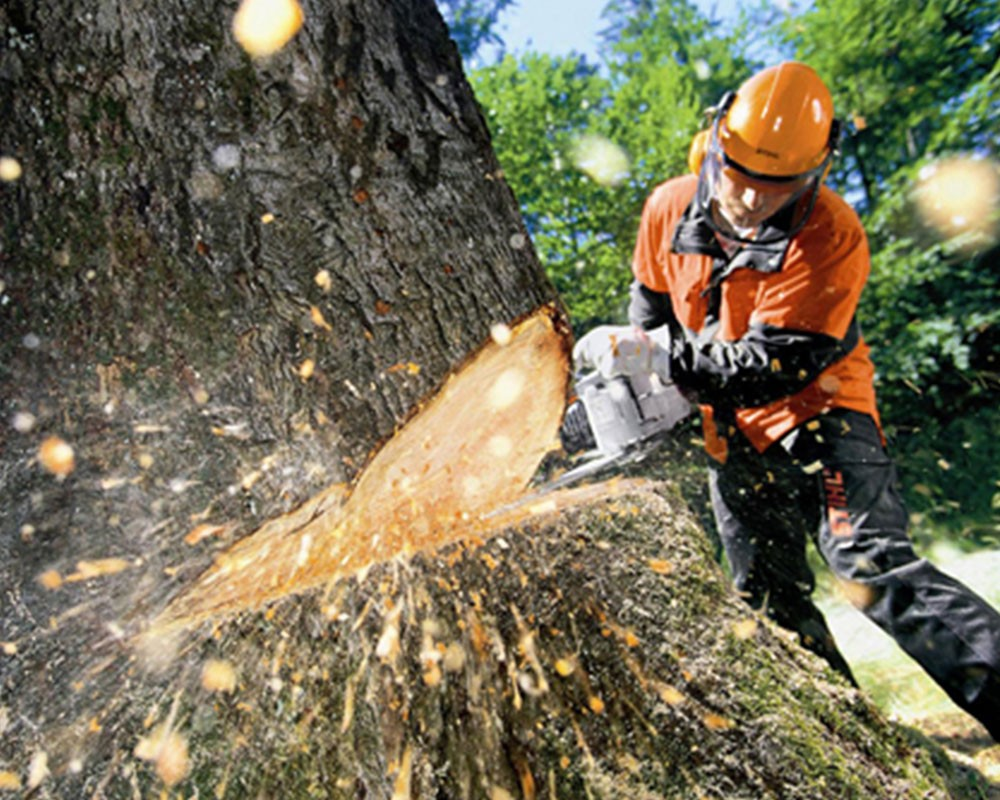 Tree Cutting-Lake Wales FL Tree Trimming and Stump Grinding Services-We Offer Tree Trimming Services, Tree Removal, Tree Pruning, Tree Cutting, Residential and Commercial Tree Trimming Services, Storm Damage, Emergency Tree Removal, Land Clearing, Tree Companies, Tree Care Service, Stump Grinding, and we're the Best Tree Trimming Company Near You Guaranteed!