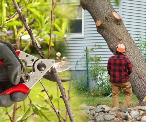 Tree pruning & tree removal-Lake Wales FL Tree Trimming and Stump Grinding Services-We Offer Tree Trimming Services, Tree Removal, Tree Pruning, Tree Cutting, Residential and Commercial Tree Trimming Services, Storm Damage, Emergency Tree Removal, Land Clearing, Tree Companies, Tree Care Service, Stump Grinding, and we're the Best Tree Trimming Company Near You Guaranteed!